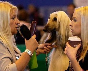 Is This the Best Photo Ever Taken at a Dog Show?