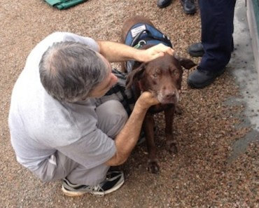 Angel the Service Dog Rescued From Freezing Canal