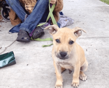 Story About Puppy in Need and His Generous Owner Will Make Your Heart Melt