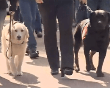 Washington Woman Trains Dogs to Help Vets With PTSD