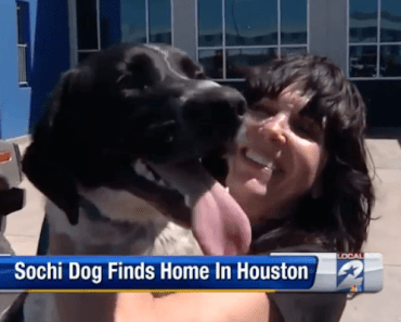 Sochi Rescue Dog Finds New Loving Home in Houston