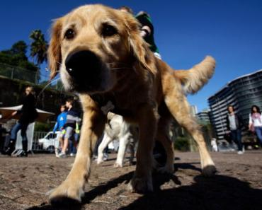 Five Dogs Considered to be the Best Family Dogs