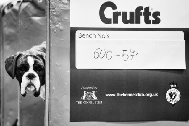 An Alternative View Of 2014 Crufts Dog Show