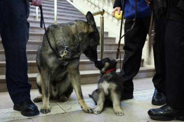American Kennel Club Releases America's Most Popular Breeds