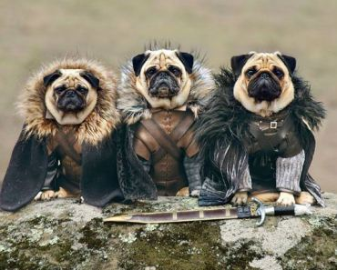 """Game of Thrones Reaches New Heights with """"Pugs of Westeros"""""""