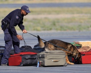 Drug Sniffing Dogs Becoming More Popular With Parents