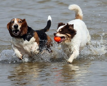 The Best Tips to Get Your Dog To Go in the Water