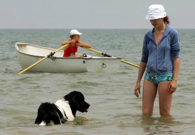 Chicago Named Dog-Friendliest Big City In North America