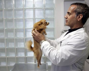 Five Vet Terms Every Dog Owner Should Know