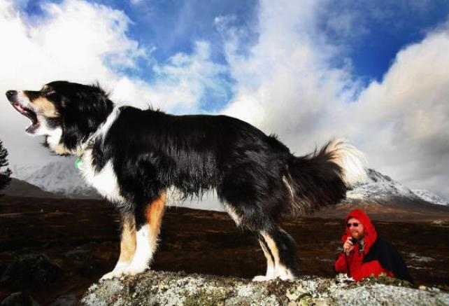 Annual Assement of Search and Rescue Dog Association