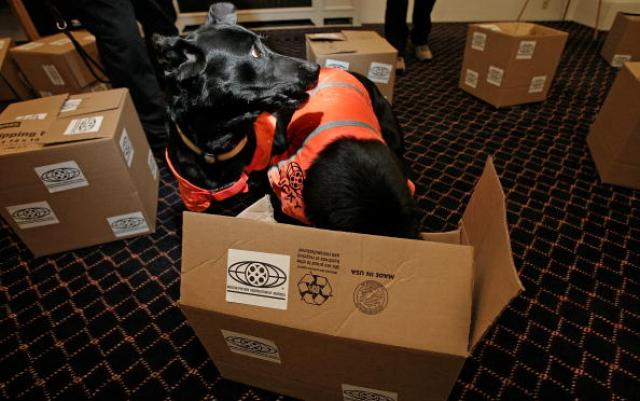 Dogs Trained To Sniff Out DVDs Are Demonstrated By The MPAA
