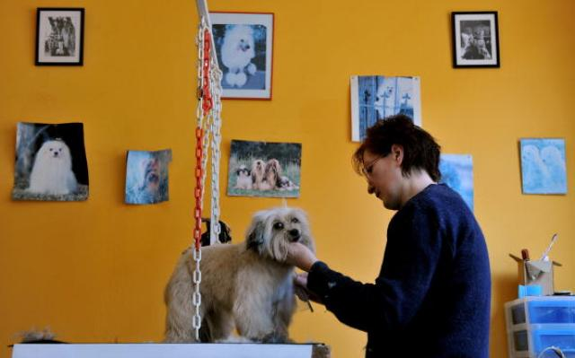 Dogs & Cats Grooming Salon Activity in Paris
