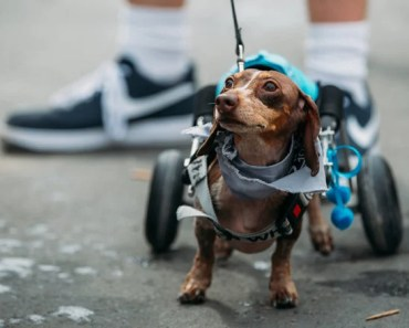 Disabled Dog Steals the Show in this Race