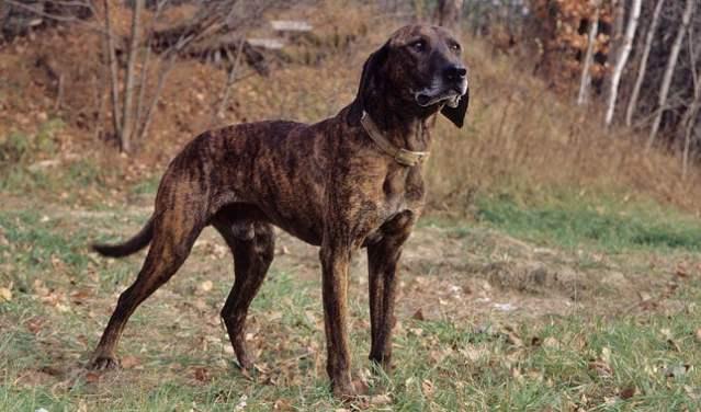 plot hound