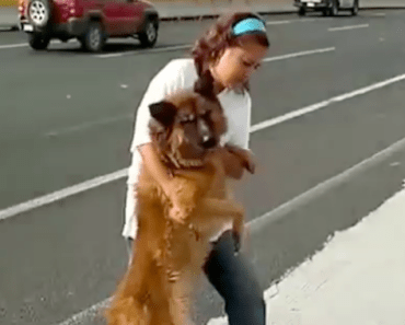 Woman Risks Her Life to Help an Injured Dog on the Highway