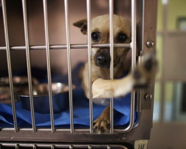 Five Reasons to Give a Shelter Dog a Chance