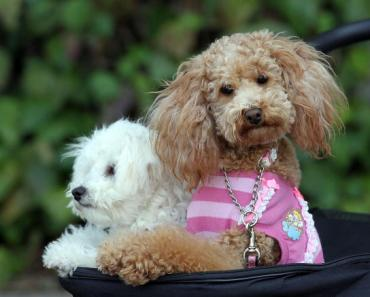 The Ten Most Misunderstood and Punished Dog Breeds