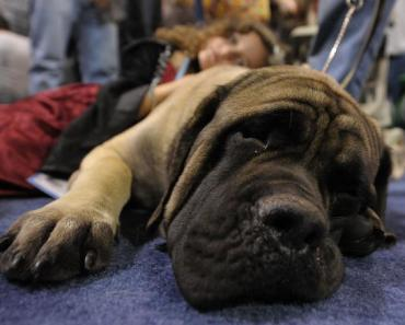 15 Dog Breeds That Love To Do Hard Work