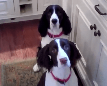 These Dogs Do a Hilarious Dinner Dance