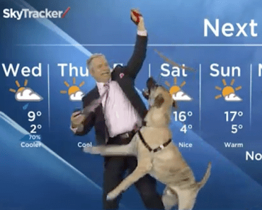 dog-on-air