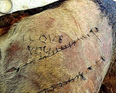 """Obsessed Vet Student Who Stitched """"I Love You"""" onto Dog's Skin is Being Investigated"""