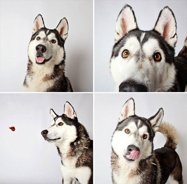 adopted-dog-teton-pitbull-humane-society-utah-27