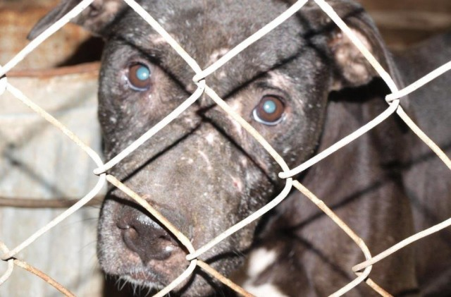 rescued-dog-fighting-canine