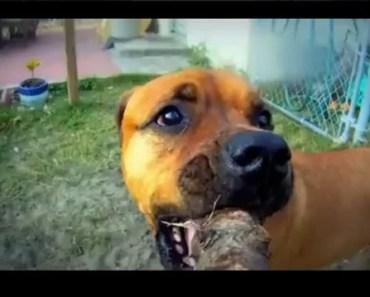 Dog GoPro