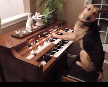dog play piano