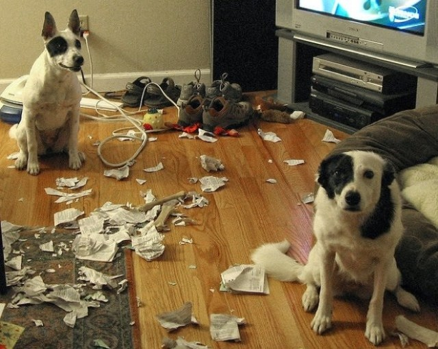 ooops dogs
