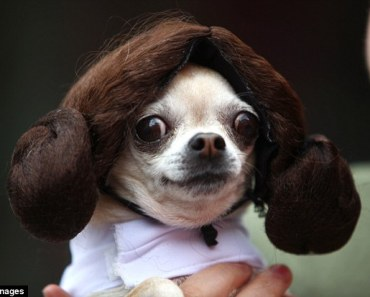 20 Dogs who are Huge Star Wars Fans