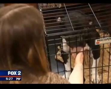 City Lifts Pit Bull Ban After Dog Saves Domestic Abuse Victim