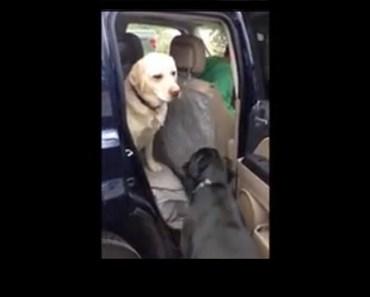 dog helps friend