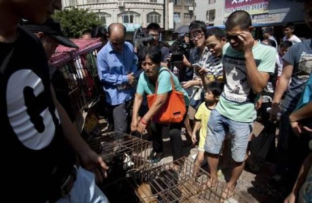 dog market