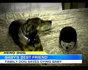 dog saves baby