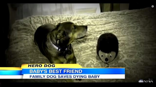 dog saves baby