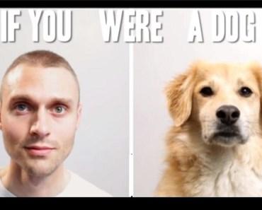 dog vs human