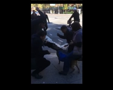 NY Street and Owner are Thrown Into a Frenzy When a Pit Bull Attacks a Cat