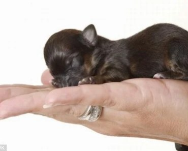 20 Dogs So Tiny These Pictures Almost Look Fake