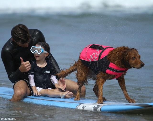 Ricochet the surfing dog