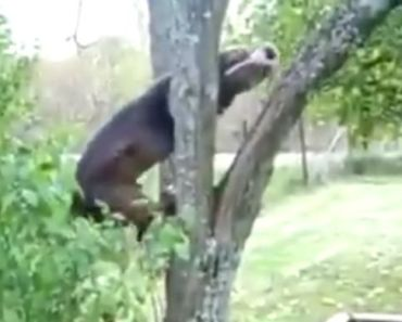Pit Bull's Ball Gets Stuck In A Tree But Nothing's Gonna Stop Him!