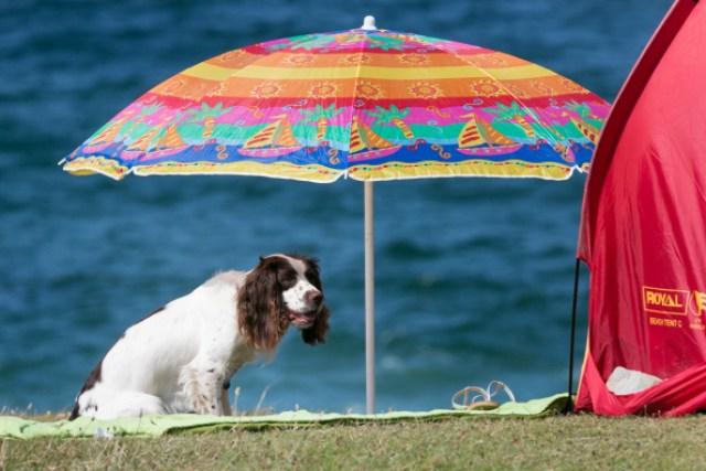Dog at the beach