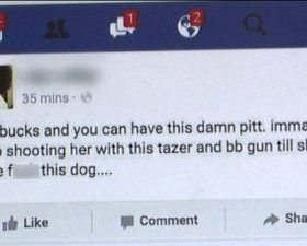Woman Threatens Her Pit Bull On Facebook and Now Faces Animal Cruelty Charges