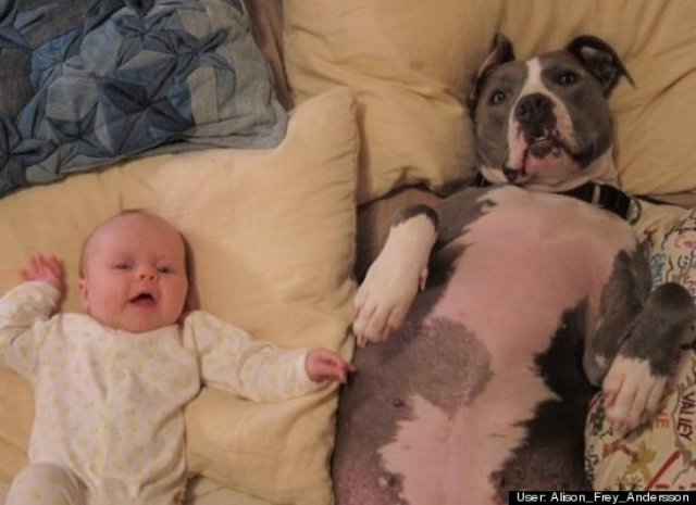 baby and pit bull lying down together