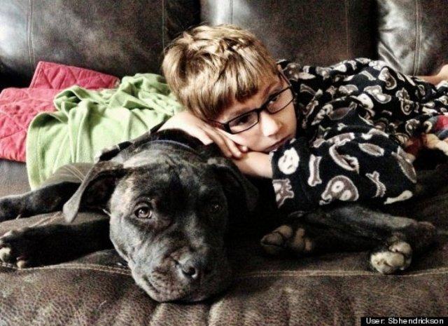child sleeping on his pit bull dog