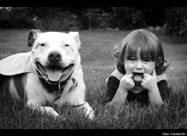 kids and pit bulls making faces