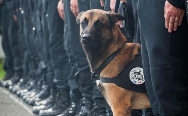 Diesel a hero dog