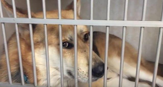 Roger the Shelter Dog