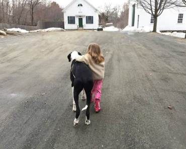 Great Dane Service Dog helps 11-year-old Girl with Rare Disorder Walk