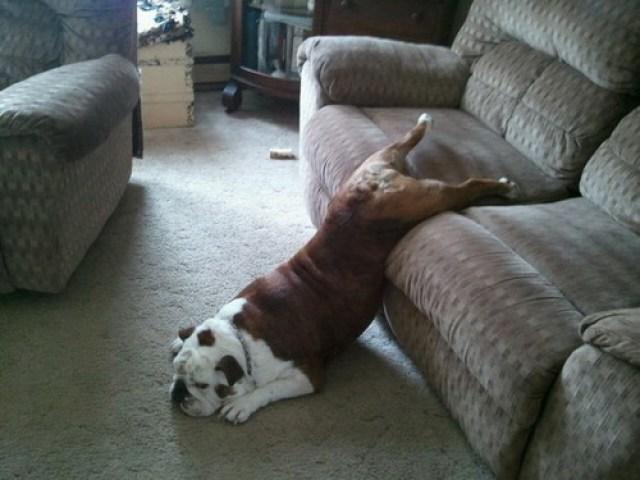 dog tried to wake up